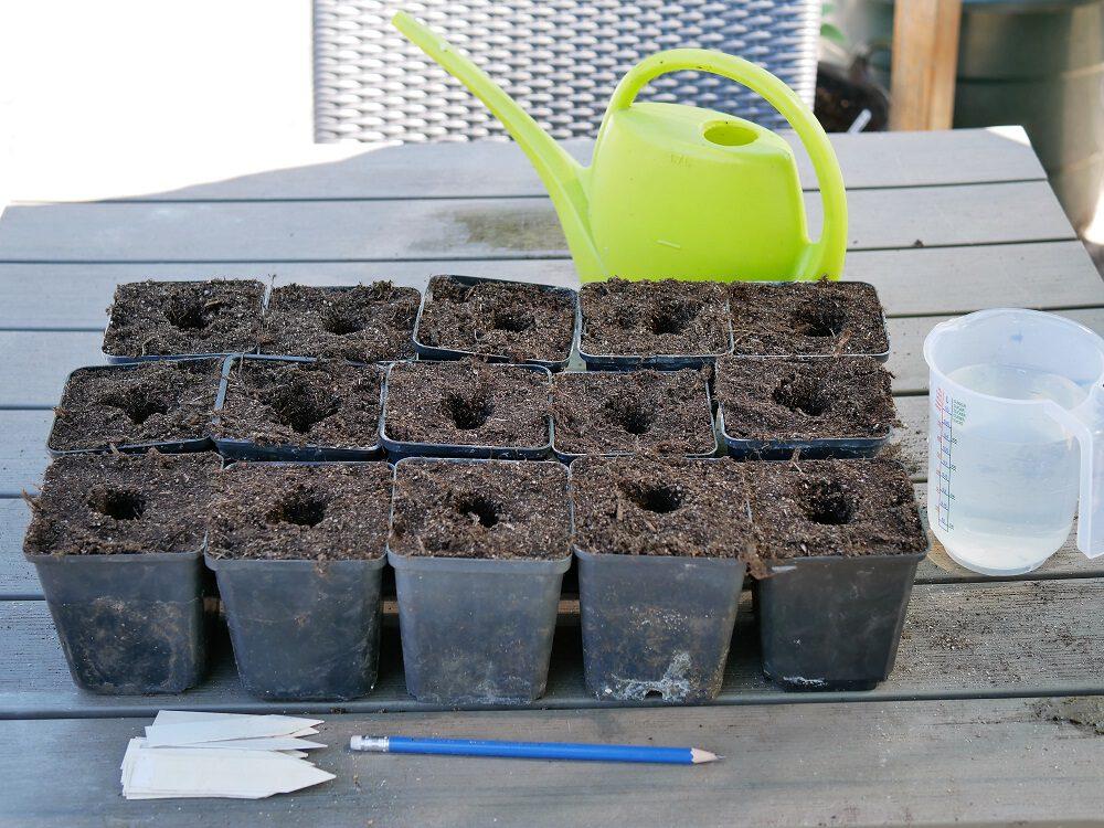 diana-foto-2-tomaten-stekken-voorbereiden