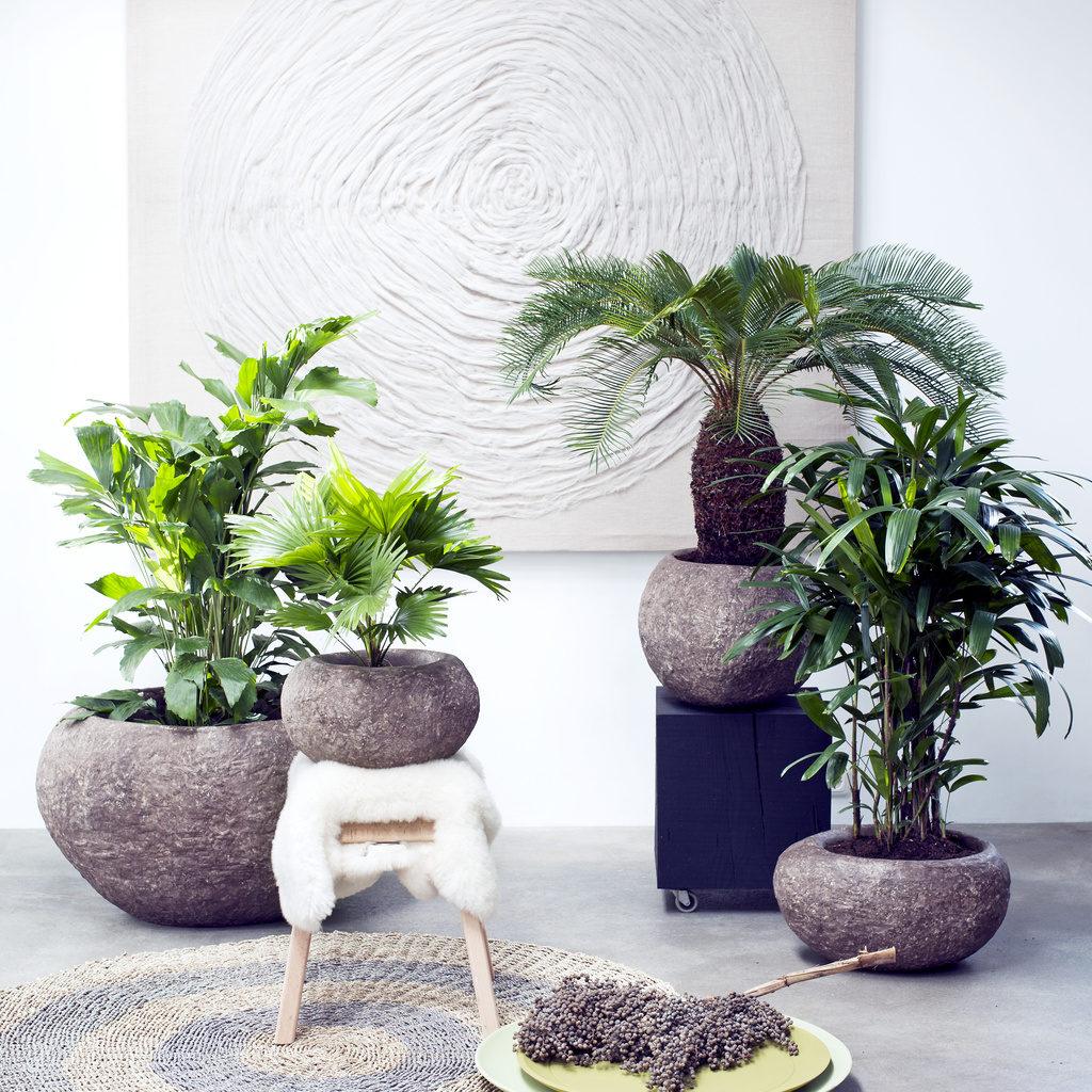 palmen-2