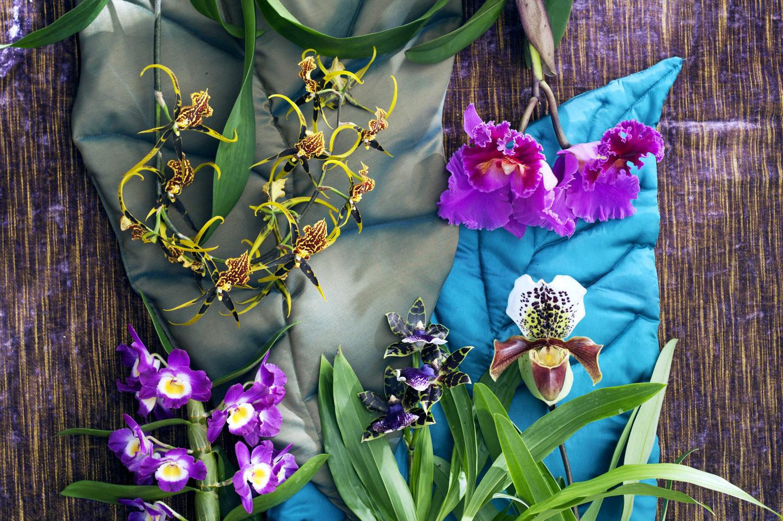 soorten-orchideeen