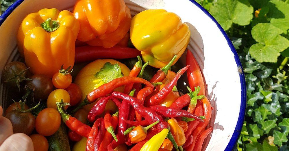 Schaal met onder andere pepers, paprika's en cherry tomaten.