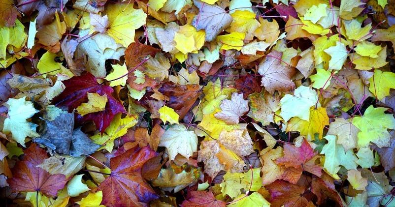 herfst tuintips