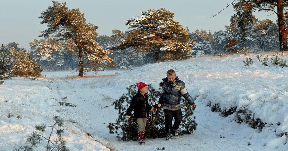 hoge-veluwe-kerstboom-zagen