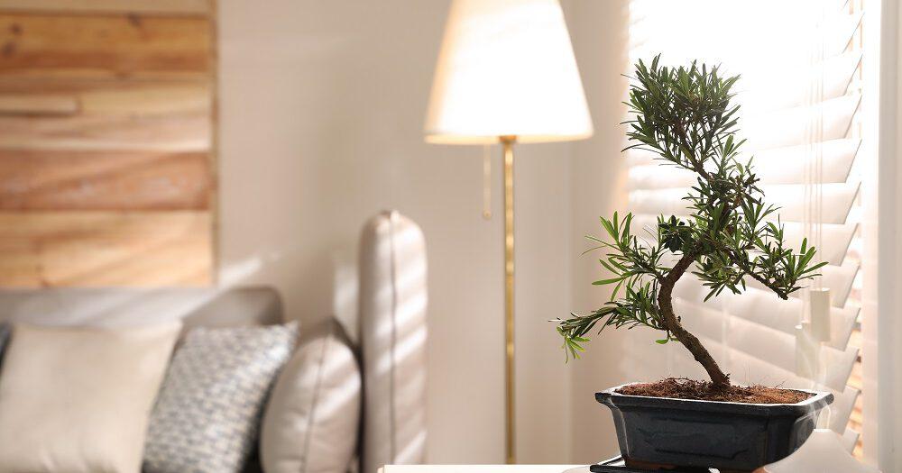 Een kleine bonsai boom in huis heeft de juiste verzorging nodig.