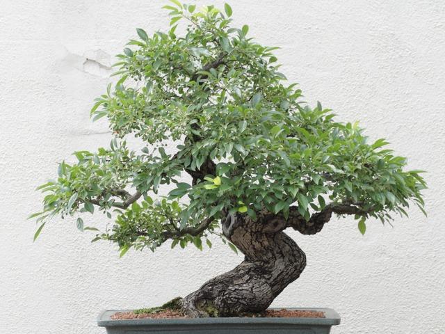 Bonsai Boom Verzorgen : Bonsai pokon groen doet je goed